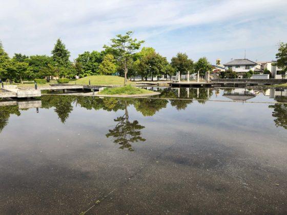 城東ふれあい公園の池の水