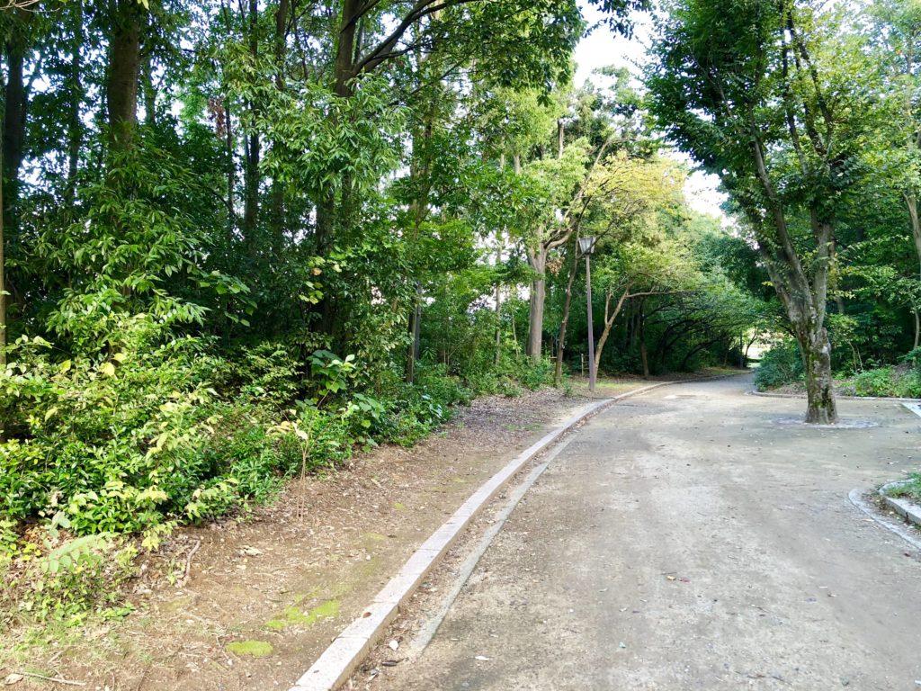 稲荷公園の木々