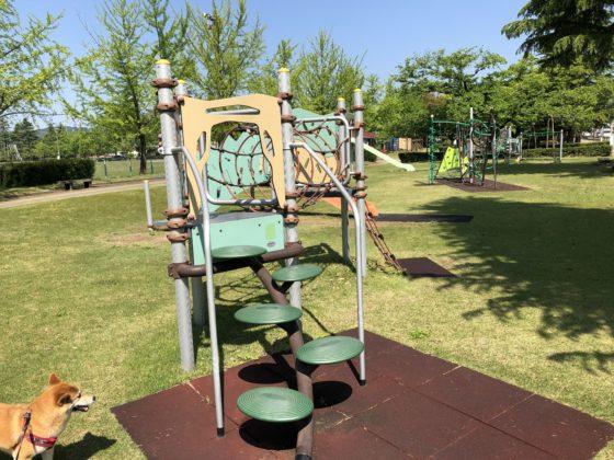 五福公園の遊具を見る柴犬