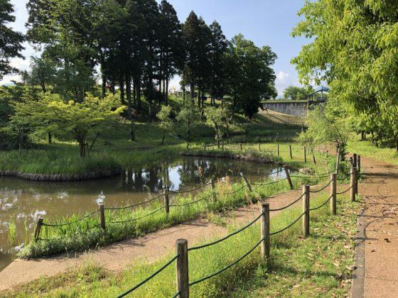 こぶしの谷の池