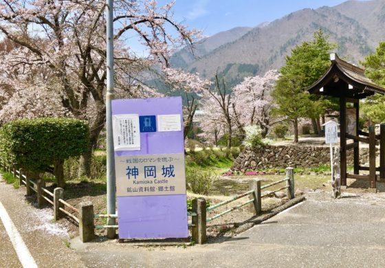神岡城の看板と桜