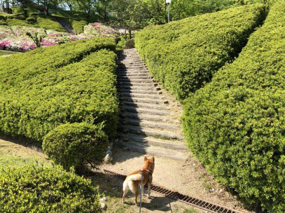 水道つつじ公園内を散歩する犬