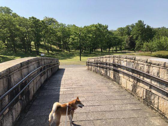 園内の橋を渡る柴犬