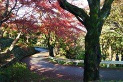 展望台までの歩道の紅葉